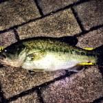 温排水に癒やしを求めて 兵庫県姫路市蟠洞川(ばんどう川)釣行