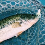 O.S.Pハイピッチャーで数釣り満喫!合川ダム月例釣行7月
