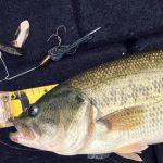 フィッシングプレッシャーをものともしない巻きの釣りについて