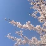 福島県深田ダム~4/23お花見釣行~