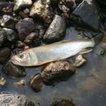 続・川のぬし釣り!!次は山奥の渓流!延竿を卒業しスピニングタックルでぬしを探す!
