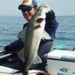 2016年初漕ぎ!カヤックで桜鯛とアオリイカを狙ってきました!
