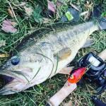 【撃ち巻きともに絶好調】春のカスミ水系オカッパリ釣行