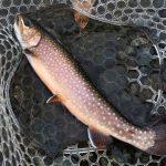 LOG.25色んな魚を楽しむなら管釣り!春の開成水辺フォレストスプリングス