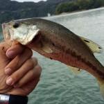 10月14日 津久井湖オカッパリポイントの調査