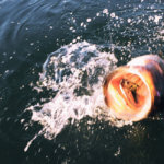【アメリカでバス釣り】Skinner Lake(スキナー・レイク)でフロッグにデカイのキター!