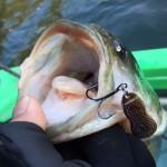 冬の感動の一本と巡り会えた合川ダム釣行