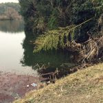 早春の淡路島野池釣行!