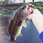 今週末は、弁慶バス釣り大会!
