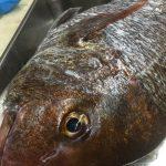 東京湾で鯛を釣る-鯛のフルコースに舌鼓-タイしゃぶ初体験