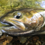 源流域の渓魚と早朝遊び:最もシンプルな原点の釣り
