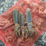 食通は知ってる季節の美味「まじゃく」を求めて有明海へシャク釣りに行ってきました!!