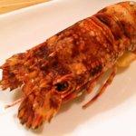 福岡の海で手に入れた伝説の食材『ヒメセミエビ』を食べてみました!!