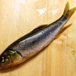 釣嫁の田舎にある小川で川のぬし釣り!!今回は塩焼きと煮魚にして美味しく頂きました(*´艸`*)
