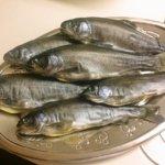 九重フィッシングリゾートで仕留めたニジマスの燻製レシピを公開!!