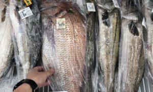 糸島の美味しい魚を買うならここ!安くて新鮮で美味しいお魚や地元産野菜が揃うお店をご紹介!