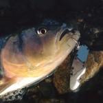 【日本三大怪魚】ビワコオオナマズ釣行