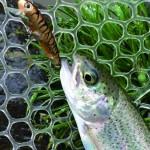 LOG.22プラグで釣る!管釣りトラウトに挑戦!fish on 王禅寺2015.3.1