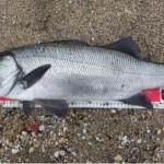 自然と向き合い魚と遊ぶ!