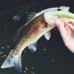 【秋の亀山湖】初心者でも簡単に釣れる!ドライブシャッド最高〜!