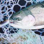 【芦ノ湖のニジマス釣り】なぜかジャッカルのコサジでだけいいサイズが釣れた!!